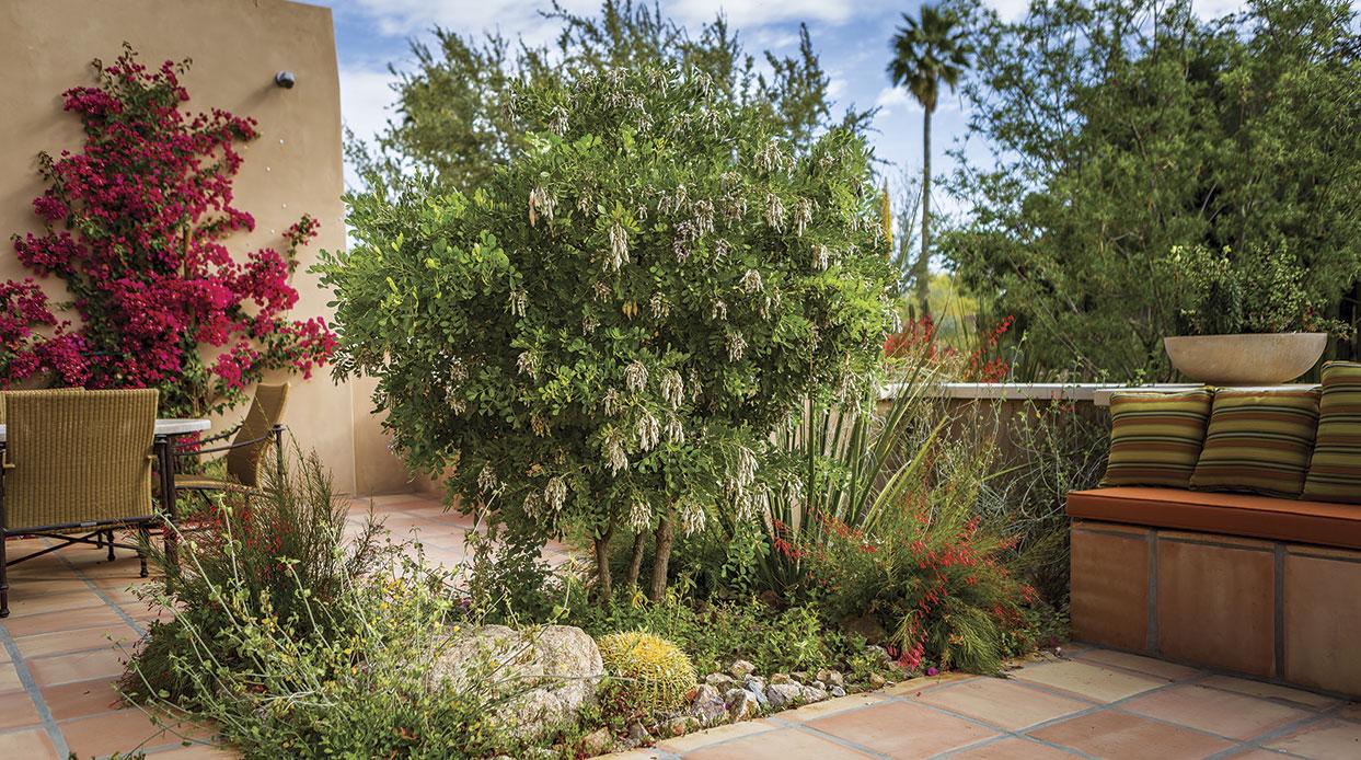 New Voices - Phoenix Home & Garden