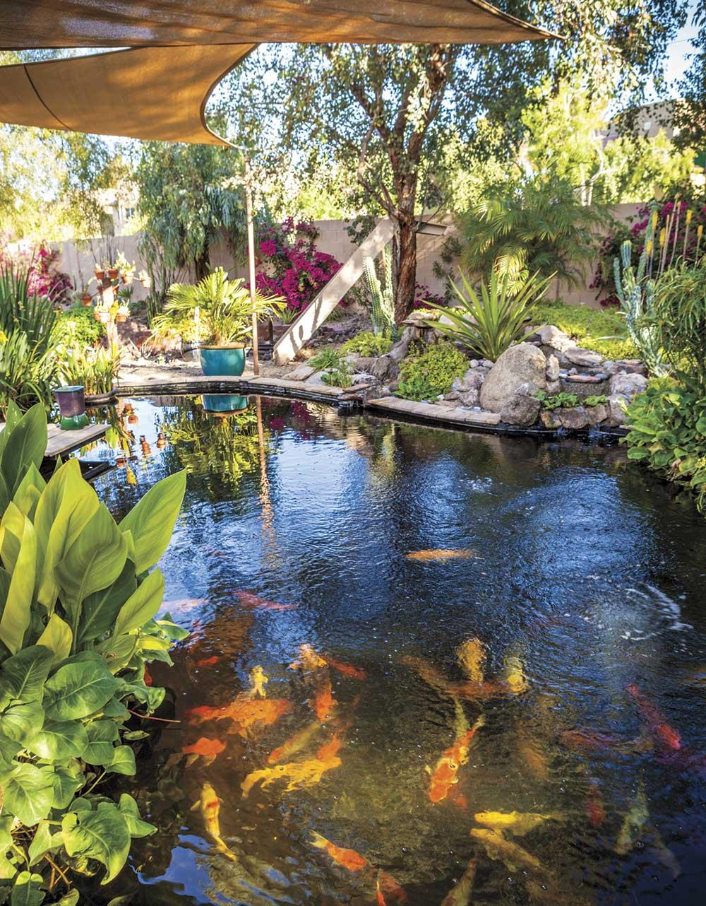 Build A Better Pond Phoenix Home Garden