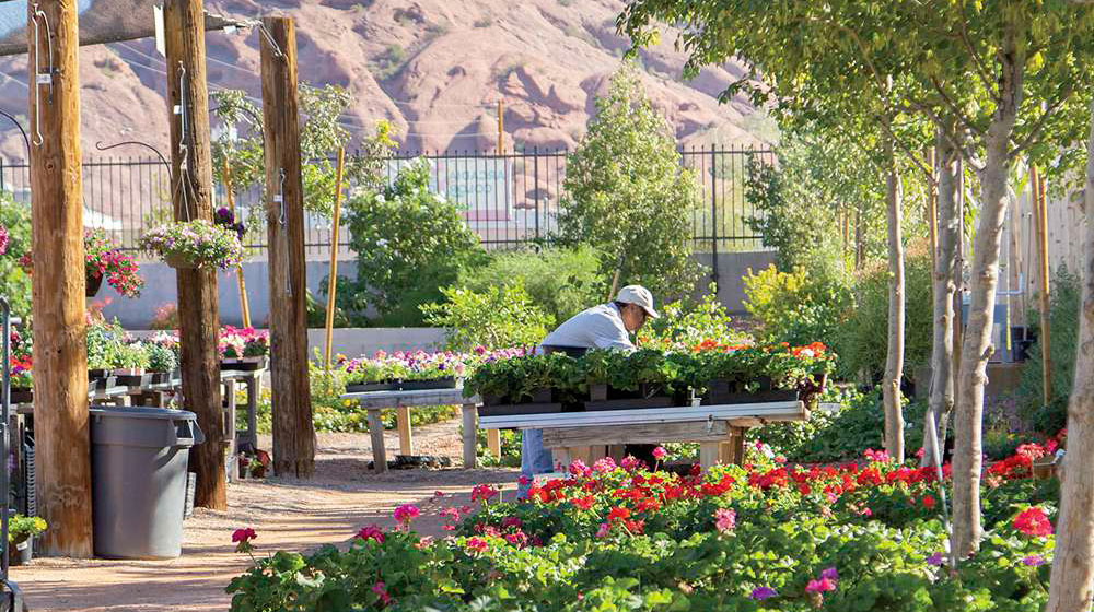 Arcadia Color Garden Puts Down Roots Phoenix Home