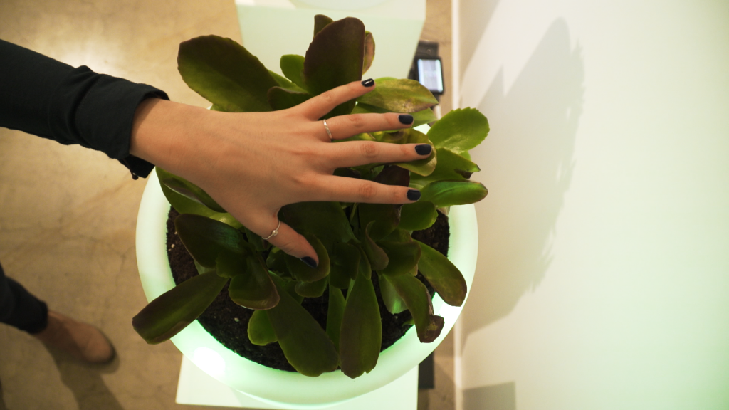 Person touching plant