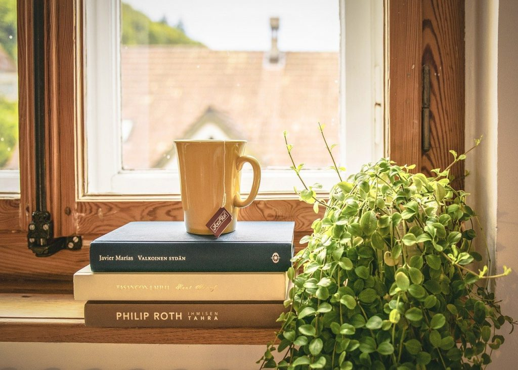 Potted plant on a windowsill.